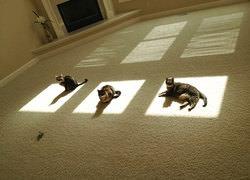 Sıcaklık Nerede Kediler Orada